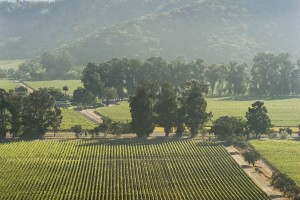 Vineyard_Voltz