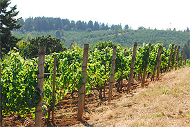 maresh_vineyard_hillside(1)